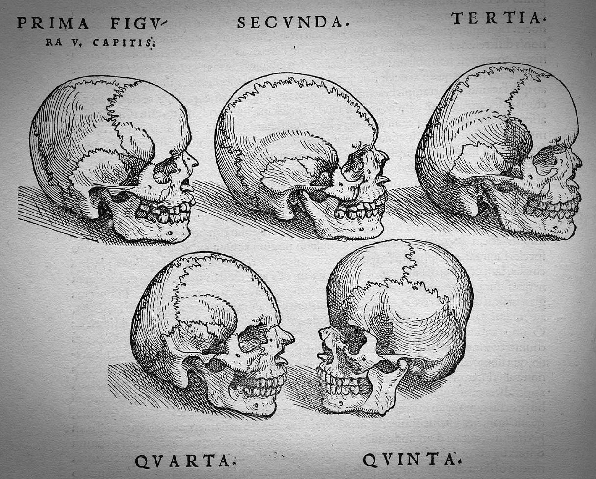 Vesalius_Fabrica_skulls
